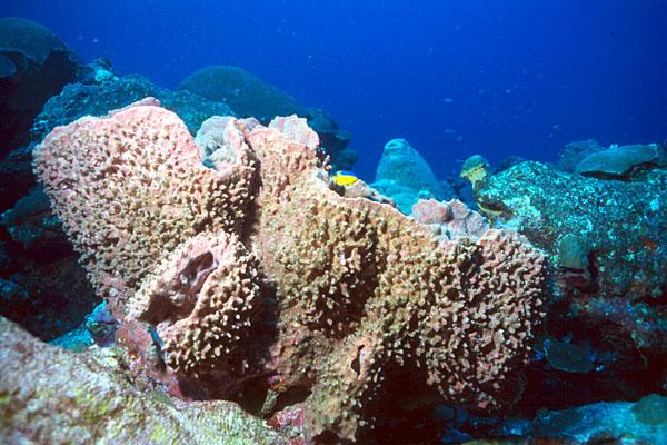 sponges in ocean
